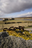 Lichen on rock rusty chain Stock Image