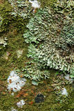 Lichen on Rock Surface Stock Images