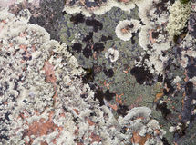 Lichen on a rock Stock Photography