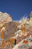 Lichen rocks. In the montain Royalty Free Stock Photo