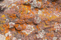 Lichen on the rocks Royalty Free Stock Images