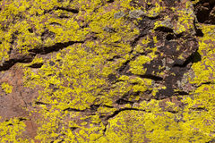 Lichen on Rocks. Rocks with Yellow Gree Lichen on Rock Surface Stock Images