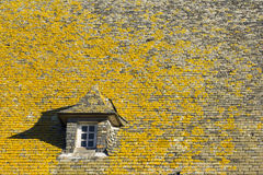 Lichen on the roof Royalty Free Stock Image