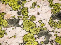 Lichen And Rose Quartz Abstract Royalty-vrije Stock Afbeelding