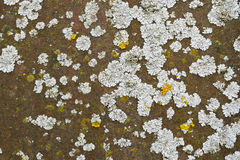 Lichen on a rusted metal Stock Photo