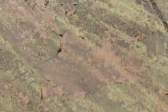 Lichen sec sur le plancher Photos libres de droits