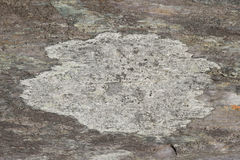 Lichen on slate. A central patch of lichen with dark edge on a multicoloued area of slate Royalty Free Stock Photography