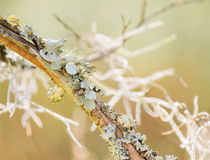 Lichen and Spanish moss Royalty Free Stock Images