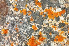 Lichen on a stone Royalty Free Stock Photo