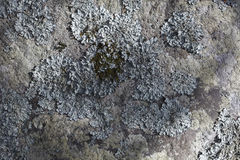 Lichen on stone. Lichen on big stone, outdoor nature background Royalty Free Stock Images