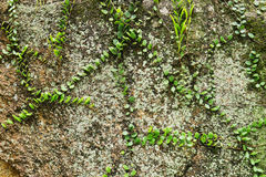 Lichen on the stone Stock Photography