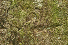 Lichen on the stone Royalty Free Stock Image