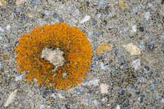Lichen on a stone Royalty Free Stock Images
