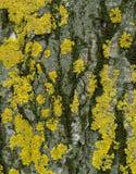 Lichen on stone Stock Image