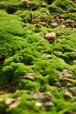 Lichen and stone on soil Stock Photography