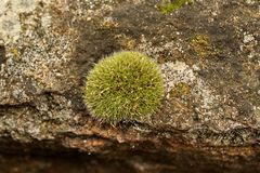 Lichen on the stone Royalty Free Stock Photo