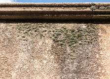 Lichen on stucco Royalty Free Stock Images