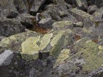 Lichen sur des roches dans les montagnes d'Ural images stock