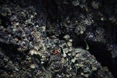 Lichen sur l'écorce Photographie stock