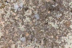 Lichen sur la pierre Images libres de droits