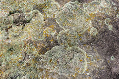 Lichen sur la pierre Photographie stock