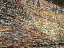 Lichen sur la roche images libres de droits