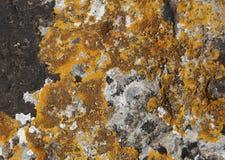 Lichen sur la roche Photo stock