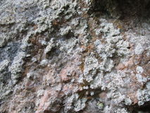 Lichen sur la roche Photographie stock