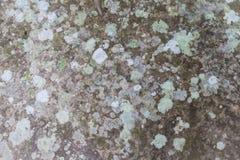 Lichen sur la roche Photos stock