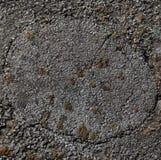 Lichen sur la surface de l'arbre putréfié Image libre de droits