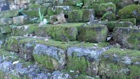 Lichen sur le bâtiment antique de vieux mur Photos stock