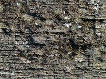 Lichen sur le bois Photographie stock libre de droits