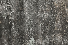 Lichen sur le vieux mur Photos stock