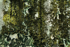 Lichen sur le vieux mur Photographie stock libre de droits