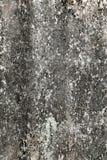 Lichen sur le vieux mur Photos libres de droits