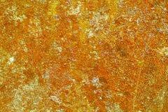 Lichen sur le vieux mur de la colle Photos stock
