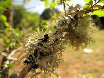 Lichen sur un arbre Images stock