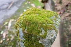 lichen sur un poteau Images libres de droits