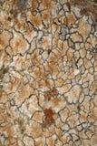 Lichen sur une roche images libres de droits