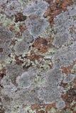 Lichen Texture auf Felsen Stockfotos
