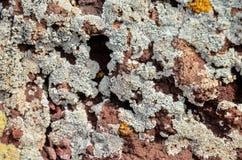 Lichen Texture Pattern fotografia de stock royalty free