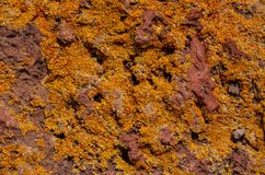 Lichen Texture Pattern fotos de stock