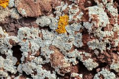 Lichen Texture Pattern imagens de stock royalty free