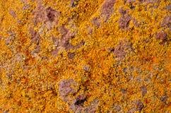Lichen Texture Pattern imagens de stock