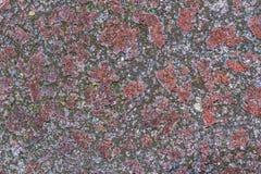 Lichen Texture Pattern Background no assoalho foto de stock royalty free