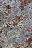Lichen Texture on Rock Stock Photos