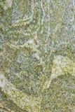 Lichen texture on rocks Stock Photography