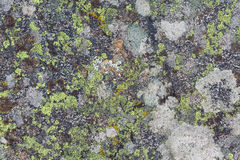 Lichen textures Stock Photography