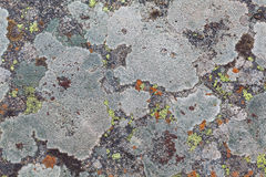Lichen textures Royalty Free Stock Photo