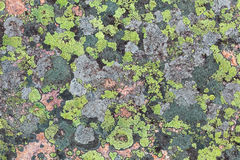 Lichen textures Stock Images